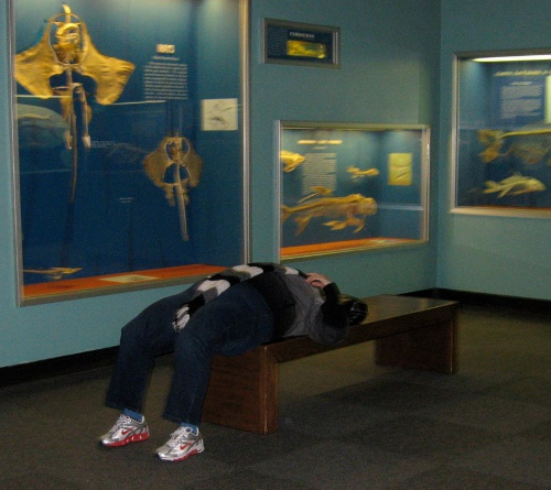 Picture of Asleep at the Museum of Natural History