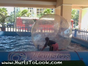 Photo of Hamsters Water Balls Orlando HTL